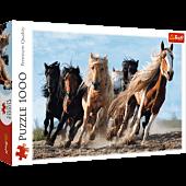 Galopping horses